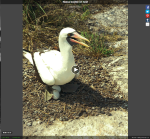 My recording about a bird nest on the Galapagos Islands using PixStori.